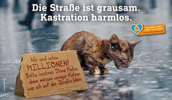 Seit April 2018 in Kraft: Katzenschutzverordnung