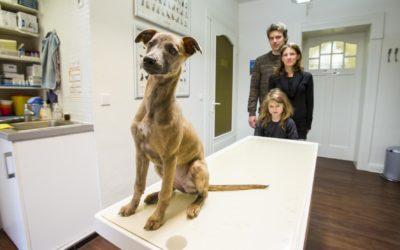 Tierkrankenversicherungen – nur tierisch teuer oder trotzdem sinnvoll?