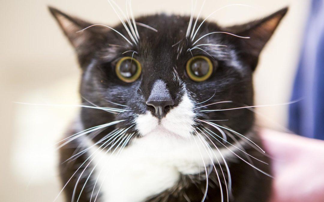 Ist die Katze kastriert, darf sie aus dem Haus